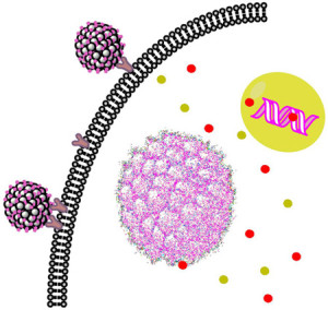 Multicompartment Intracellular Self-Expanding Nanogel for Targeted Delivery of Drug Cocktail