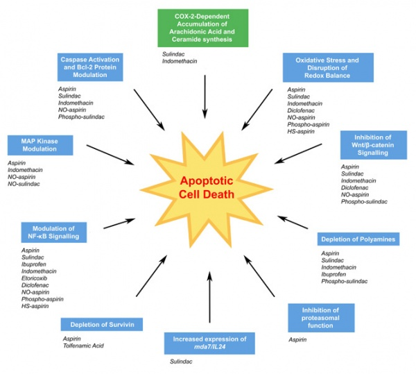 analysis of antibiotics affecting yeast cells Penicillin - and most other clinically relevant antibiotics - are useful to us because they specifically target bacterial enzymes and have little to no effect on eukaryotic cells (that includes our own cells and yeast cells) in some cases, this is because the protein directly targeted by the .
